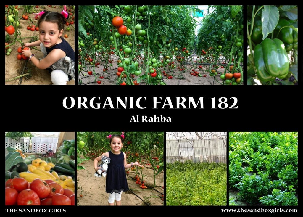 organic farm 182 - The Sandbox Girls